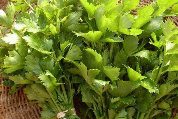 Σέλινο (leaf celery)