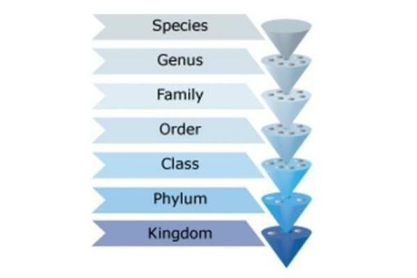 Η σημασία της συστηματικής ταξινόμησης των ψαριών