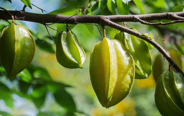 Starfruit ή καραμπόλα (carambola)